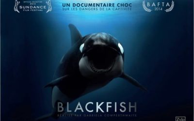 Blackfish, Gabriela Cowperthwaite (2013)